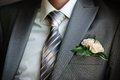 Groom with the boutonniere Royalty Free Stock Image