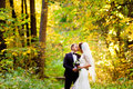 The groom is kissing the bride in autumn forest standing under branches with yellow leaves Royalty Free Stock Photos