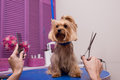 Groomer holding scissors and comb while grooming dog in pet salon Royalty Free Stock Photo