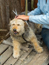Grooming of stray dog ​​at the shelter Royalty Free Stock Images