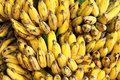 Gros michel bananas branch ripe health tropical fruit Royalty Free Stock Photography