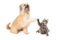 Grote hond en weinig cat high five Royalty-vrije Stock Afbeeldingen