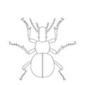 Ground beetle bug carabidae sketch of isolated on white background design for coloring Stock Photos