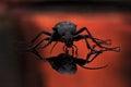 Ground beetle carabidae in macro closeup portrait Stock Photos