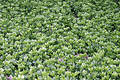 Ground Cover Royalty Free Stock Photo