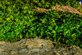 Ground cover leafs covering and rocks Royalty Free Stock Images