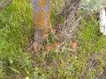 Ground cover orange mold tree