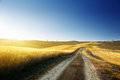 Ground road on field in tuscany italy at sunset time Royalty Free Stock Images