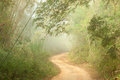 Ground road in jungle Royalty Free Stock Photo