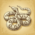 Ground snake illustration vector engraving style Stock Photography