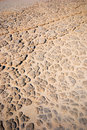 Ground texture Royalty Free Stock Image