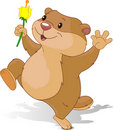 Groundhog dancing with first flower Royalty Free Stock Photo