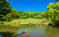 Grounds of Nara Park in Kansai Region - Japan Royalty Free Stock Photo