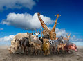 Group of africa animals Royalty Free Stock Photo