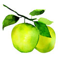 Group of apples watercolor painting on white background Stock Images