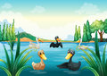 A group of aquatic birds at the pond illustration Royalty Free Stock Photo