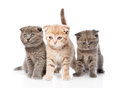 Group baby kittens sitting in front.  on white background Royalty Free Stock Photo