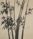 Group of bamboo trees