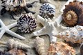 Group of beautiful sea shells on beach Royalty Free Stock Photo