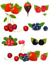 Group of berries and cherries.  Vector Stock Images
