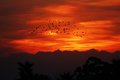 Group of bird in sunset africa Royalty Free Stock Photography