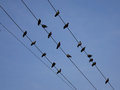 Group of birds sitting on wires Royalty Free Stock Photo