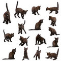Group of black kittens Royalty Free Stock Photo