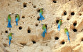 Group of blue tailed bee eater on sand Stock Photography