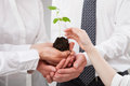 Group of business people holding a green sprout and child's hand Royalty Free Stock Photo