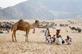 A group of camel traders during the annual camel fair pushkar india Royalty Free Stock Photography