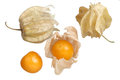 Group cape gooseberry seed Stock Images