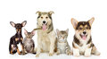 Group Of Cats And Dogs In Front.