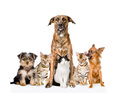 Group Of Cats And Dogs Sitting In Front. Looking At Camera