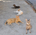 A group of cats sitting on the pavement Stock Photos