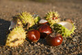 Group of chestnuts Royalty Free Stock Photography