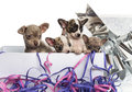 Group of chihuahua puppies in a present box with streamers isolated on white Stock Photo