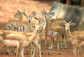 A group of deer Royalty Free Stock Photos