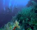 Group of divers going deep, Cuba Stock Photography