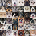 Group of dogs and cats purebred on a photography montage Stock Image