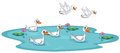 A group of ducks at the pond illustration on white background Royalty Free Stock Photo