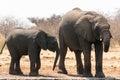 stock image of  Group of elephants near waterhole
