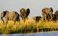 Group of Elephants on the river bank Royalty Free Stock Photo