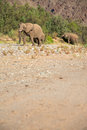 Group of elephants in the skeleton coast desert Royalty Free Stock Photos