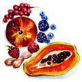 Group of exotic fruits watercolor painting on white background Stock Photo