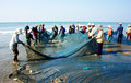 Group of fisherman pull fish net Stock Photos