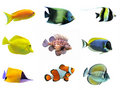 Group of fishes Royalty Free Stock Photos