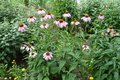 Group Of Flowering Plants Of E...