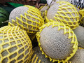 Group of Fresh organic green cantaloupe melons and big ball with Royalty Free Stock Photo
