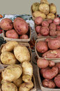 Group of fresh potatoes market select Royalty Free Stock Photography