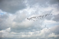 Group Of Geese Flying In A Clo...